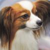 «Каникулы продолжаются, или День собак»: в Биологическом музее пройдет праздник