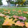 «Активные граждане» обсуждают, убирать или нет листья во дворах