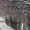 В Москве и области ожидаются небольшие осадки и до 5 градусов тепла