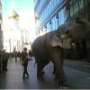 Кого только не встретишь на улицах столицы?! Слон прогуливался вчера по Белой площади.