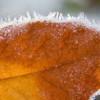 Похолодание придет в Москву на неделе с 17 по 23 октября