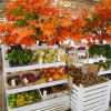 Осенний гастрономический фестиваль «Золотая осень»