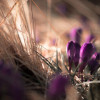 В «Музеоне» распускаются первые цветы