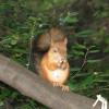 Генпрокуратура не нашла нарушений при вырубке деревьев в «Кусково»