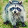 Вечер с енотами: в Московский зоопарк теперь можно прийти не только днем
