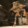 Ящер-попугай и мезозойские крокодилы: в Палеонтологическом музее открылась выставка «Сибирский пситтакозавр»