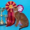 Юбилейная праздничная выставка кошек в Сокольниках