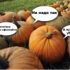 Ботанический сад МГУ «Аптекарский огород» призывает посетителей перестать вытаптывать тыквы