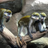 1 ноября в Зоопарке откроется обновленный музей