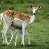 В «Лосином острове» появятся вольеры с лисами, оленями и кабанами