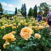 Самые красивые места в Москве, где можно любоваться цветами