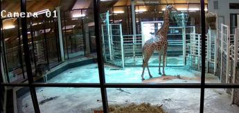 Московский зоопарк установил в вольерах новые веб-камеры