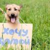 Выставка собак из приюта в парке «Садовники»