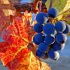 Фестиваль цветов, урожая и искусства «Краски осени» пройдёт в Москве
