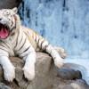 Московский зоопарк впервые отметит в этом году День студента.