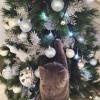 Уже скоро будем с котом наряжать ёлку: я — украшать, он — разрушать.